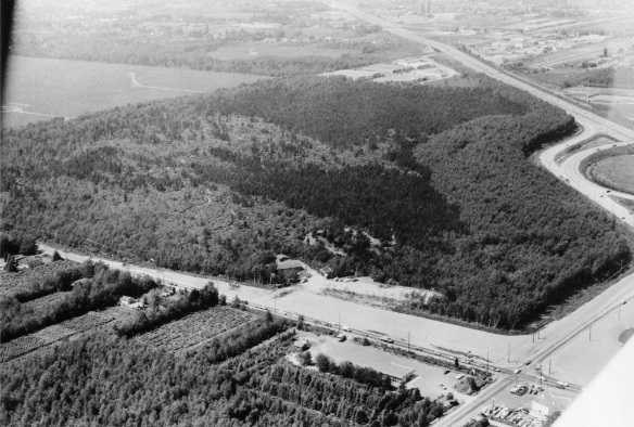 Aerial view of Richmond Nature Park, 1977. City of Richmond Archives Photograph 1978 41 5